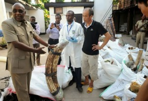 Prior to his resignation, Natural Resources and Tourism minister, Ambassador Khamis Kagasheki, inspects tusks impounded at a Mikocheni house (DSM)